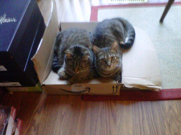 kitties in box