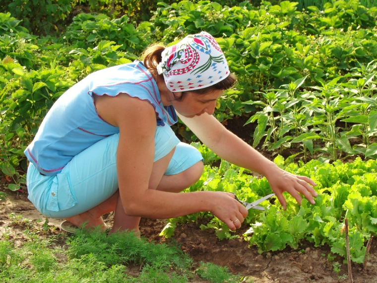 6-gardener1