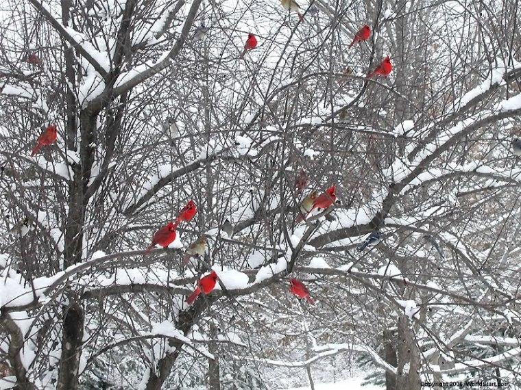 cardinals_in_snowy_trees_by_secretstich-d4tsflk