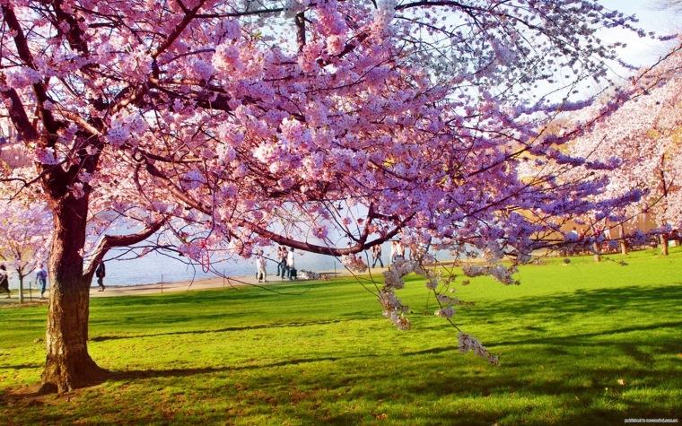 spring-15