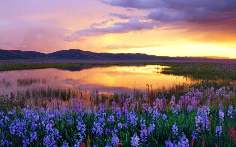 Camas Prairie at Sunset, Idaho, USA